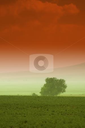 Tree behind a farm stock photo, Tree behind a farm in rural Utah by Mehmet Dilsiz