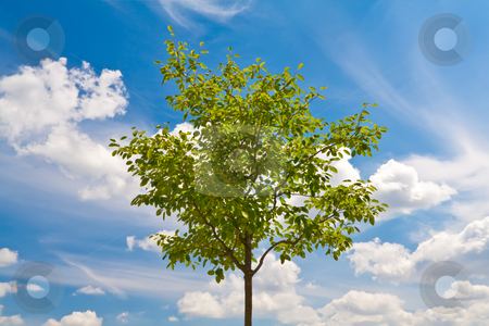 Green tree on blue sky stock photo, Green young tree on blue sky background by Dmitry Mirlin