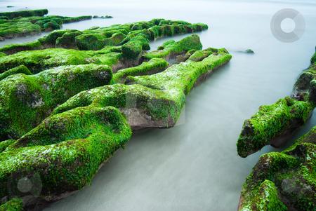 Green Rocky Seashore stock photo, Rocky Seashore with fresh seaweed, long time exposure, Taiwan, East Asia by Lawren