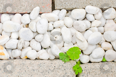 White pebble with green leaf stock photo, White pebble with green leaf in garden by Lawren