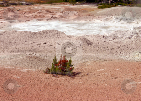 Painted Mud Pots in Yellowstone National Park stock photo, Painted Mud Pots  in Yellowstone National Park by Sharron Schiefelbein