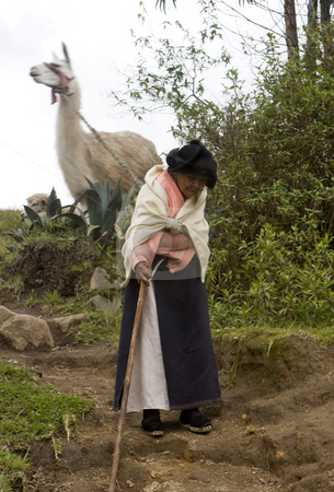 Elderly woman pulling Llama downhill Ecuador stock photo, An elderly woman pulling a Llama downhill Ecuador South America by Sharron Schiefelbein
