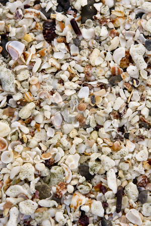 A Close-up view of seashells on a Galapagos Island beach stock photo, A Close-up view of seashells on a Galapagos Island beach by Sharron Schiefelbein