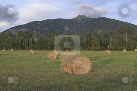 Hay field at dusk stock photo, Evening light cast on hay bails by Sharron Schiefelbein
