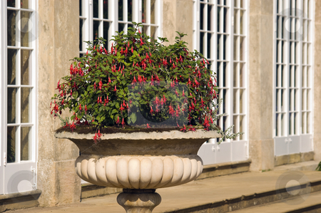 Fuchsia stock photo, Red Fuchsia in stone urn in English country garden by Stephen Meese