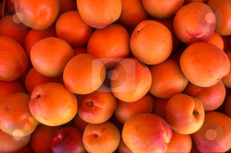 Apricots stock photo, Apricots by David Ryan