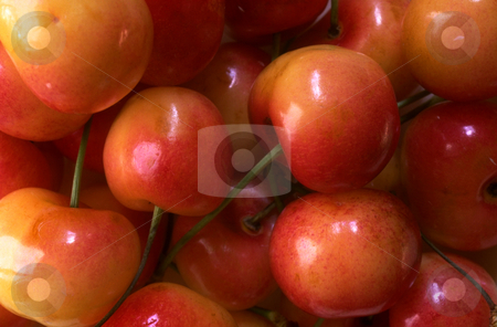 Queen Anne Cherries stock photo, Queen Anne Cherries by David Ryan