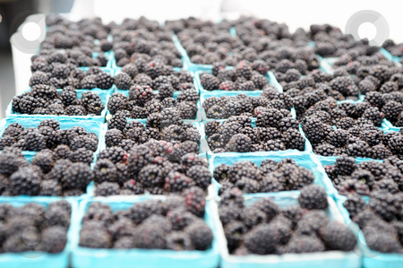 Blackberries For Sale stock photo, Locally grown fresh organic blackberries in blue paper baskets ready for sale at a farmers market by Lynn Bendickson