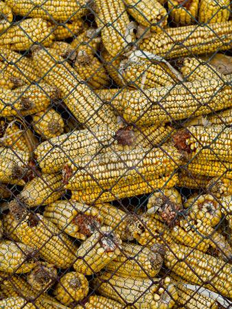 Corncobs stock photo, Pile of corncobs behing metallic grid by Laurent Dambies