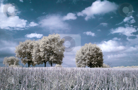 Infrared landscape stock photo, Infrared contryside landscape with freshly cut wheat on the foreground by Laurent Dambies