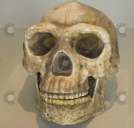 Skull from indigenous native in Peru stock photo, A Skull from indigenous native in Peru, South America by Sharron Schiefelbein