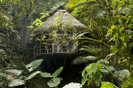 Cabana in the Ecuadorian Cloudforest stock photo, Cabana in the Ecuadorian Cloudforest by Sharron Schiefelbein