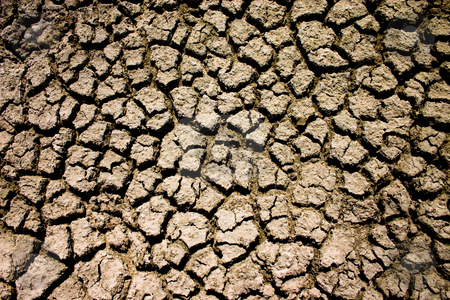 Summer Drought stock photo, Dried mud from the Etosha Pan, Etosha National Park Namibia by Darren Pattterson