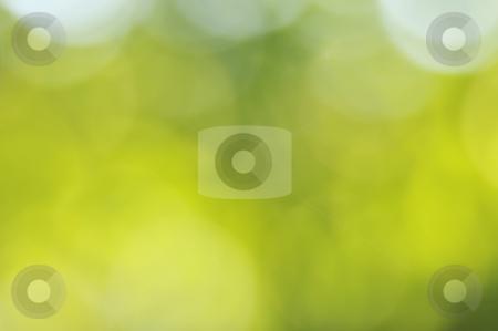 Green background stock photo, Soft green background. summer feeling by Carmen Steiner