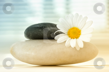 Spa moments stock photo, Two stones with a white flower by Carmen Steiner