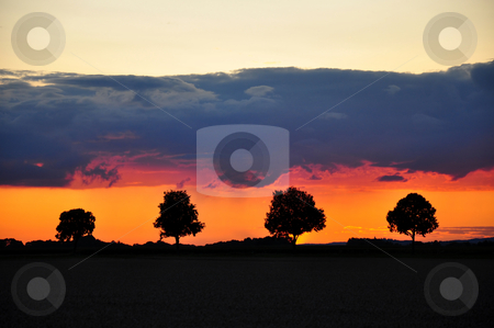 Sunset with trees stock photo, Sunset with trees by Robert Biedermann