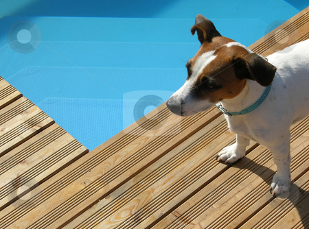 Dog relaxing at pool stock photo,  by Robert Biedermann
