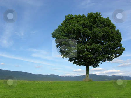 Landscape scenery with solitary tree stock photo, Landscape scenery with solitary tree by Robert Biedermann