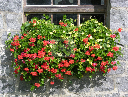 Geranium stock photo, Geranium flowers in front of a traditional farmhouse in Bavaria by Robert Biedermann