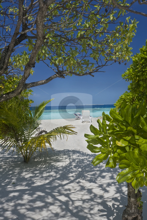 Tropical beach on Maldives Islands stock photo, Tropical beach on Maldives Islands by Sharron Schiefelbein