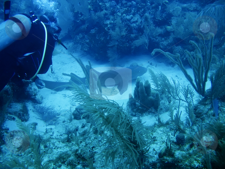 Underwater shot of Shark off the Galapagos Islands stock photo, Underwater shot of Shark off the Galapagos Islands by Sharron Schiefelbein