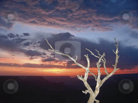 Grand Canyon Sunset Snag stock photo, A snag (dead tree) is backed by a spectacular stormy sunset over the Grand Canyon, Arizona by Kenneth Keifer