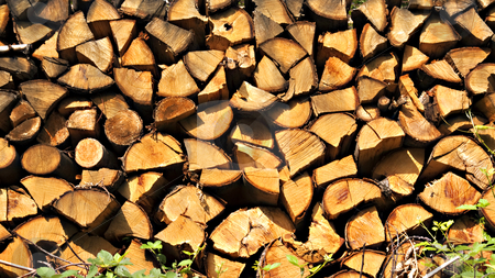 Cut trees stock photo, Close up of cut trees wood in piles by Fabio Alcini