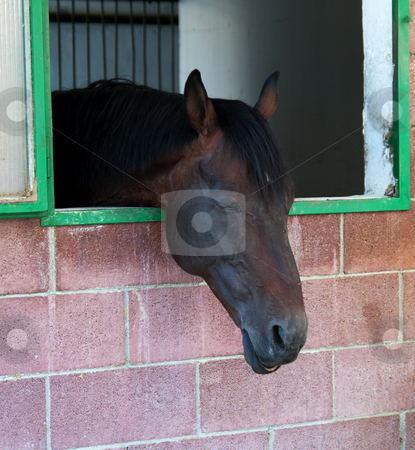 Horse stock photo, Portrait of a dark sleeping horse in a box by Fabio Alcini
