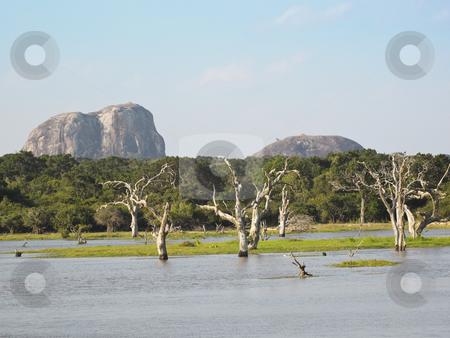 Elephant rock in sri lanka stock photo, Elephant rock in yala national park sri lanka by Mike Smith