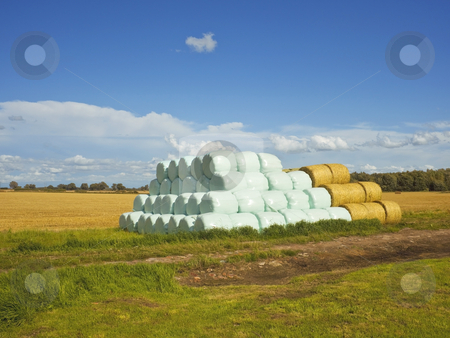 Bales at harvest time stock photo, A pile of bales wrapped in blue plastic sheeting at harvest time in summer by Mike Smith