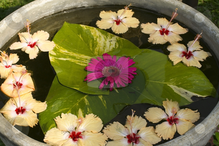 A bowl of flowers floating in water stock photo, A bowl of exotic flowers floating in water by Mike Smith