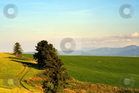 Meadows with field path stock photo, Meadows with field path and trees by Juraj Kovacik