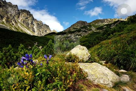 Blue flower by the stone  route  stock photo, Blue flower by the stone  route in sunny day with grass meadows and mountains by Juraj Kovacik