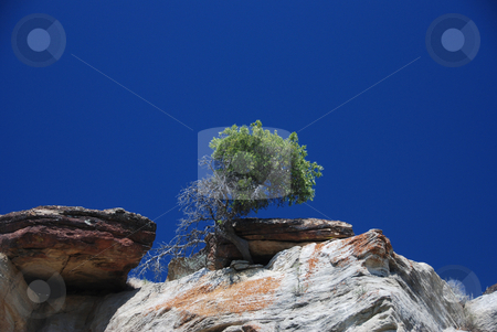 Cliff Hanger stock photo, USA, Idaho, Boise, Boise Foothills, Cliff Hanging Bush at the Quarry by David Ryan