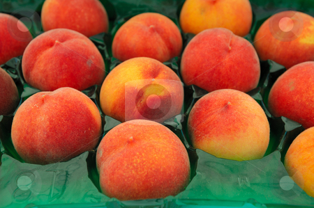 Peach stock photo, Farm fresh peaches packed in individual cells inside a packing carton at the market by Lynn Bendickson