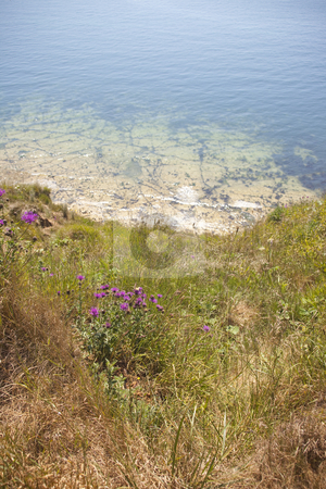 View from coastal path stock photo, Scene from coastal path with grasses and flowers on a sunny day by Mike Smith