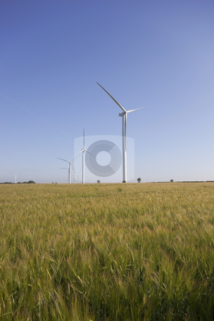 Wind farm near a barley field stock photo, Wind turbines on horizon of barley field on summer day by Mike Smith