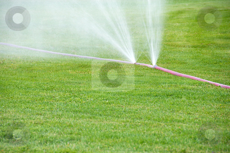 Sprinkling on grass from damaged hose stock photo, Fine water spray from garden hose over green grass by Julija Sapic