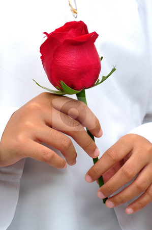 Beautiful rose in hand stock photo, Beautiful red rose in hand by Jaggat Images