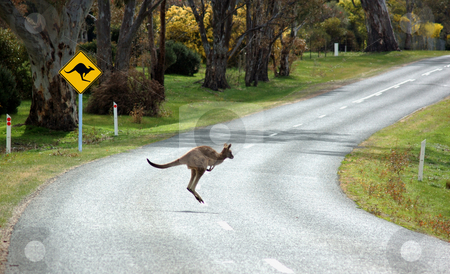 Kangaroo Crossing stock photo, A kangaroo crossing in front of a warning sign in country Victoria, Australia by Lee Torrens