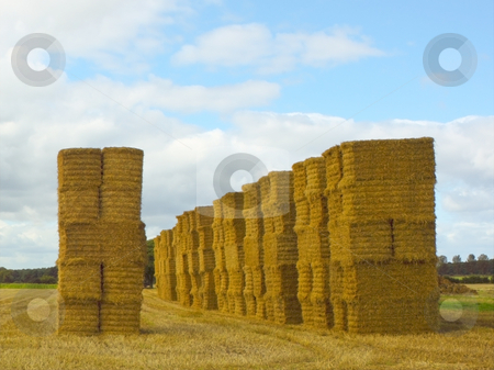 Big straw bales stock photo, Stacks of big straw bales in summer by Mike Smith