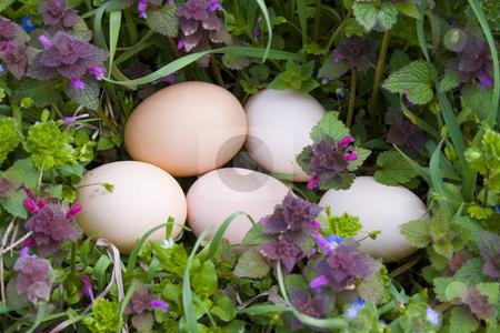 Eggs on grass stock photo, Eggs on grass by Minka Ruskova-Stefanova