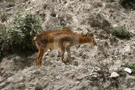 Deer stock photo, Deer on rocky slope by Darren Booth