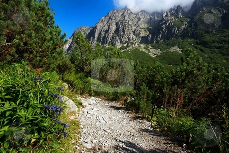 Blue flowers by walking path stock photo, Gentiana blue flowers by walking path in mountains with ever green trees by Juraj Kovacik