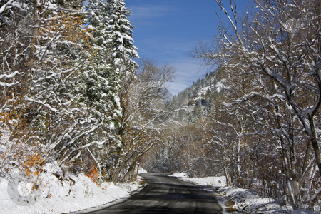 Winter stock photo, Mountain Road in the winter with snow covered trees by Mark Smith