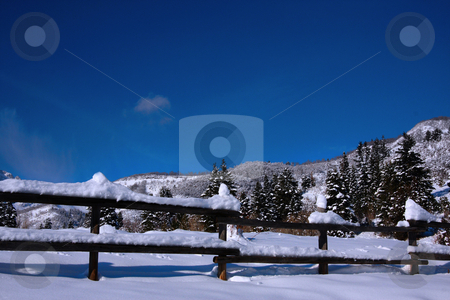 Snow And Blue skys stock photo, View of pine trees right after a snow storm With a wood fence in the foreground with deep blue sky's by Mark Smith