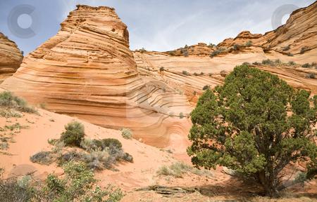 Sandstone Swirl stock photo, Spectacular sandstone swirls, Arizona, United States of America by mdphot
