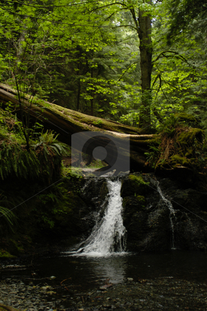Moran State Park stock photo, USA, Washington, Orcas Island, Moran State Park by David Ryan