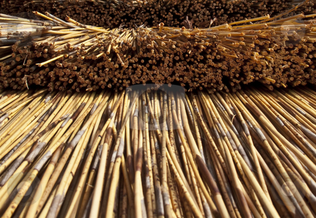 Closeup of thatched house stock photo,  by Stephen Clarke