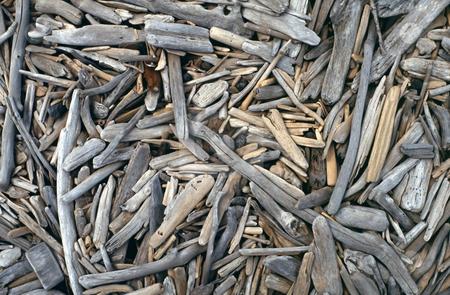 Bleached driftwood on beach stock photo, Numerous small and bleached driftwood on beach by Robert Biedermann